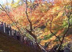 花貫渓谷 紅葉 景色