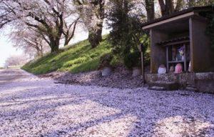 お地蔵さん 桜じゅうたん