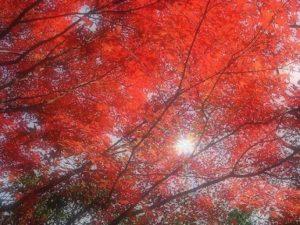 紅葉 太陽