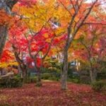 京都紅葉穴場スポットをご紹介!おすすめのライトアップは?