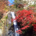 箕面公園 大滝 紅葉