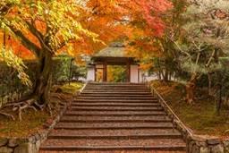京都 紅葉 おすすめ