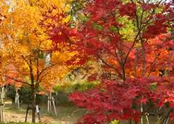 大阪城公園 紅葉と黄葉