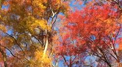 紅葉 黄葉