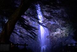 ライトアップ もみじまつり 箕面大滝