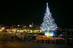 函館クリスマスファンタジー 巨大クリスマスツリー