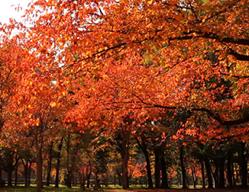 大阪城公園 紅葉 アクセス
