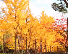 大阪城公園 紅葉 混雑