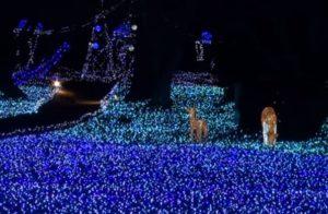 奈良瑠璃絵 奈良春日野国際フォーラム 甍~I・RA・KA~  イルミネーション