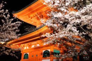 紀三井寺 桜 ライトアップ