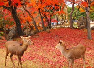 奈良公園 紅葉と紅葉絨毯と鹿