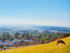 奈良公園 若草山の雄大な風景 鹿 紅葉