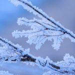 極寒の意味と読みは?英語で言うと?極寒の候の時期と例文。