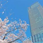 東京ミッドタウン桜の花見2019!開花や桜通りライトアップ時間は?