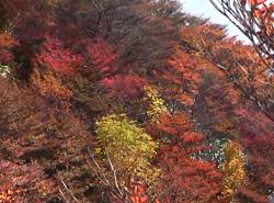御在所岳 さまざまに色付いた紅葉