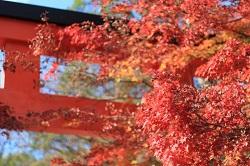 下鴨神社 京都