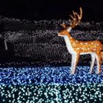 奈良瑠璃絵2019の日程とイベント内容!花火の時間や入場料金は?