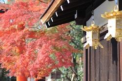 下鴨神社 紅葉