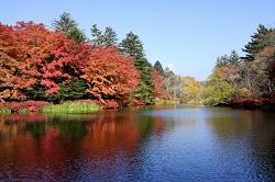 雲場池 紅葉 見どころ