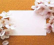 メッセージカード 桜の花