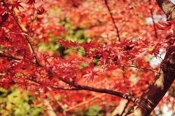 英彦山 紅葉 見どころ