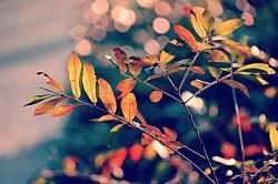 奈良公園 紅葉 時期