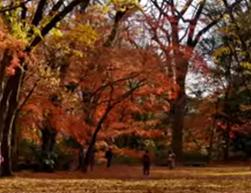 散り紅葉のじゅうたん