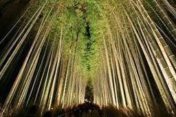 京都嵐山花灯路 竹林の小径