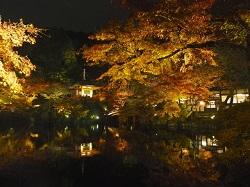 醍醐寺 紅葉 ライトアップ
