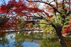 奈良公園 紅葉 見どころ