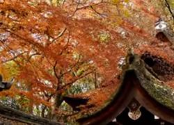 下鴨神社 ランチ