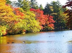 雲場池 紅葉 渡り鳥