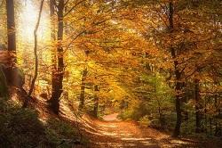 紅葉に囲まれた散歩道に降り注ぐ木漏れ日