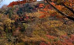 英彦山 スポット