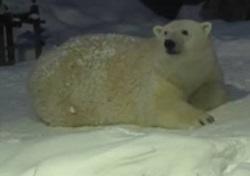 旭山動物園 雪あかりの動物園