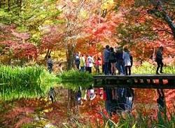 雲場池 紅葉 観光客