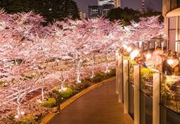 桜まつり 期間 イベント