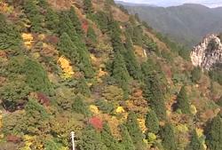 御在所岳 斜面の紅葉