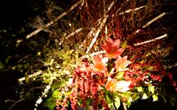 京都嵐山花灯路 生花 ライトアップ
