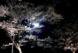 村松公園 ライトアップ