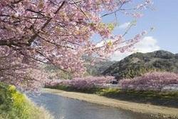 伊豆河津桜 宿泊所