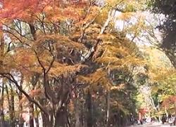 紅葉 下鴨神社