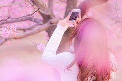 京都 名所 桜
