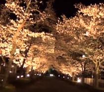 長瀞の桜 ライトアップ