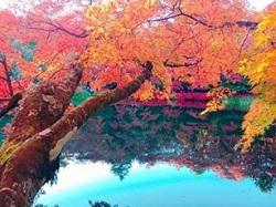 雲場池 水面に映り込む美しい紅葉