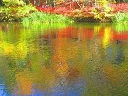 雲場池 水面に映り込む紅葉
