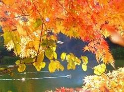 軽井沢雲場池 陽の光にきらめく紅葉