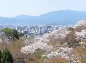 清水寺 桜 京都