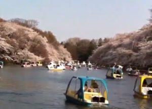 井の頭恩賜公園 井の頭池 桜 ボート