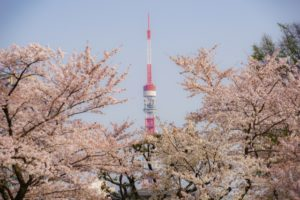 桜 青空 東京タワー